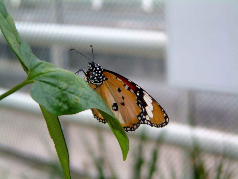 Schmetterlinghaus Botanischer Garten München