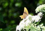 Schmetterlingiiiiiiee