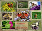 Schmetterlings Collage.....