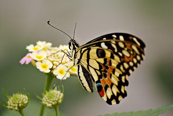 Schmetterlings-Garten Sayn 2