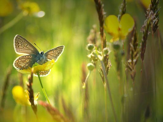 Schmetterlings-Geflüster