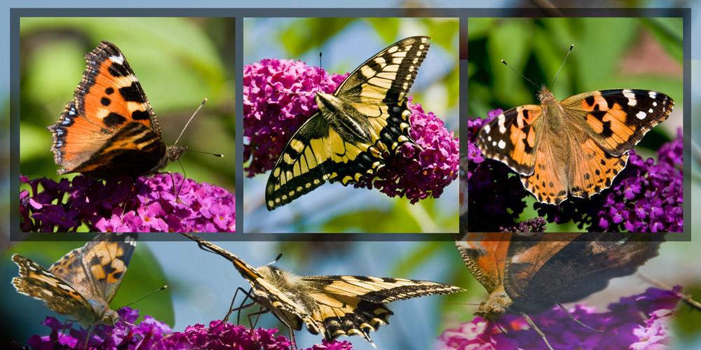 Schmetterling's Jagt