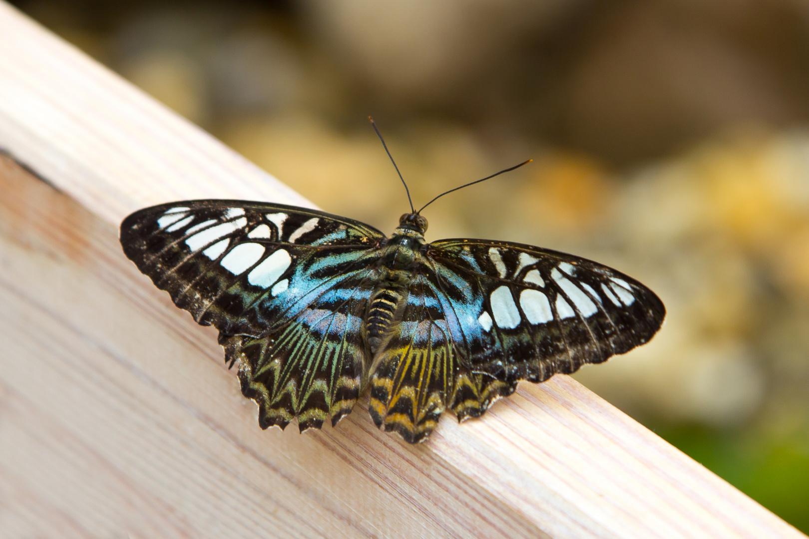Schmetterlings-Park auf Fehmarn #12