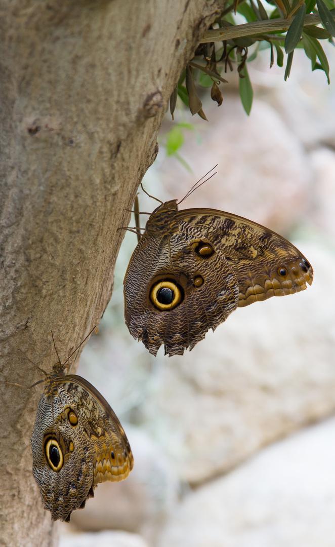 Schmetterlings-Park auf Fehmarn #13