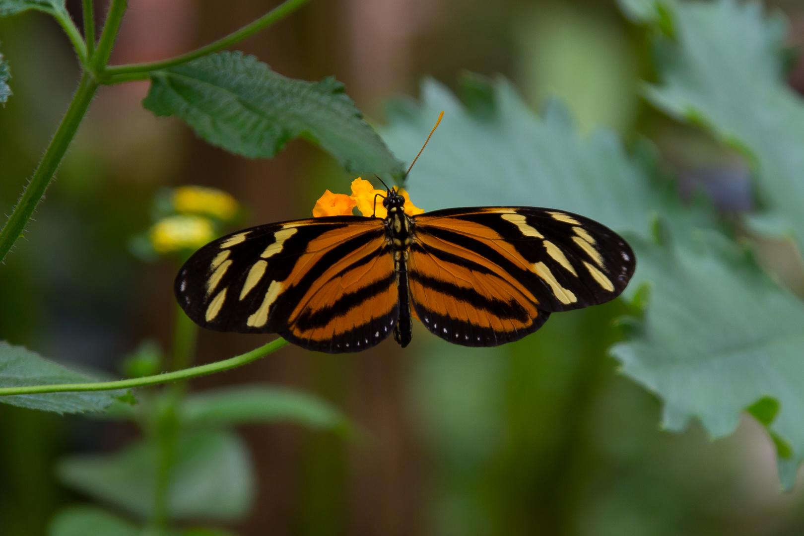 Schmetterlings-Park auf Fehmarn #4