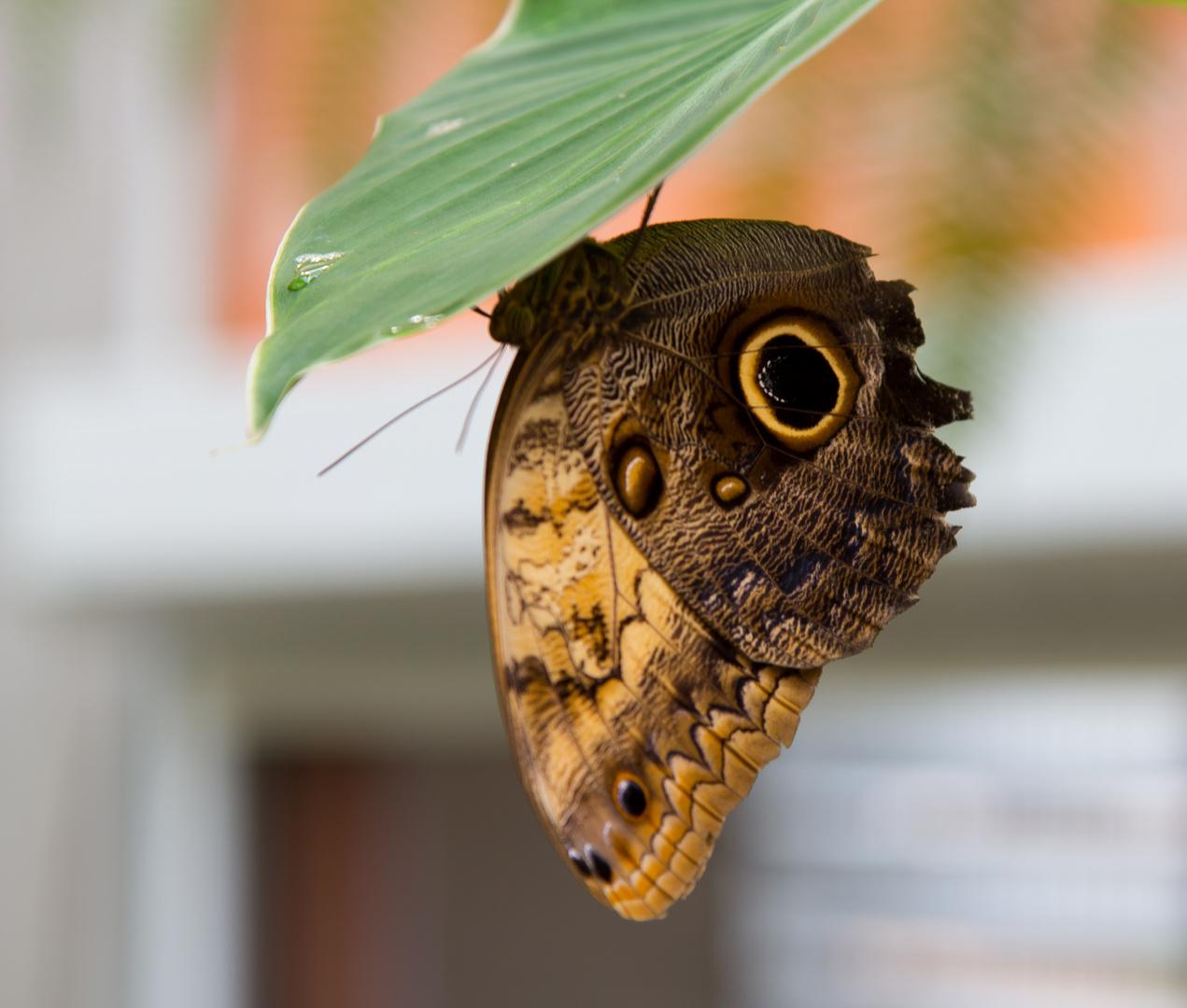 Schmetterlings-Park auf Fehmarn #7