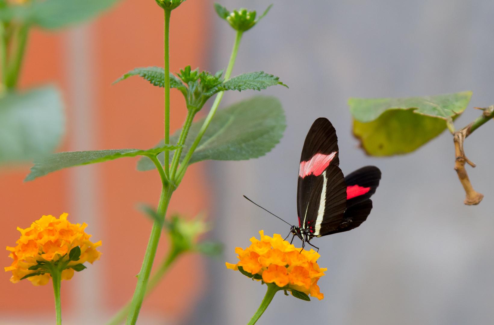 Schmetterlings-Park auf Fehmarn #9