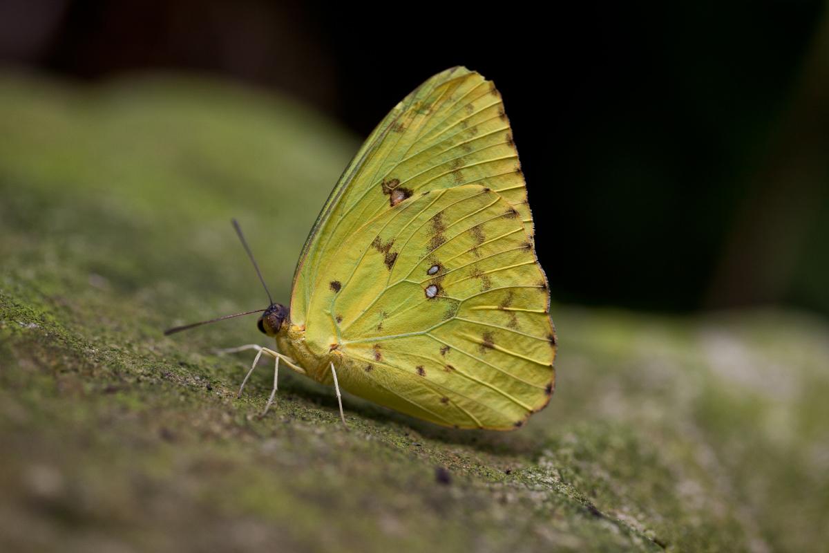 Schmetterlings Park Hamm
