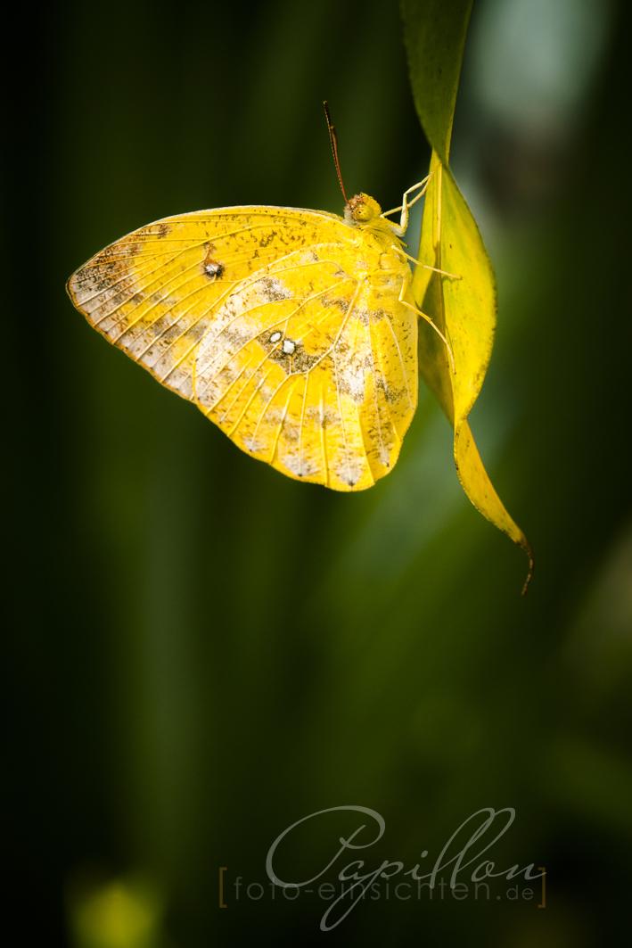 Schmetterlingsausstellung Botanischer Garten München 1
