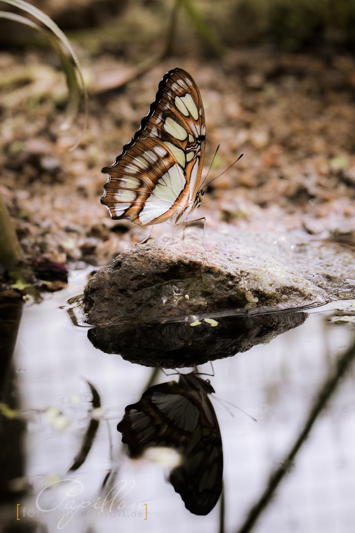 Schmetterlingsausstellung Botanischer Garten München 2