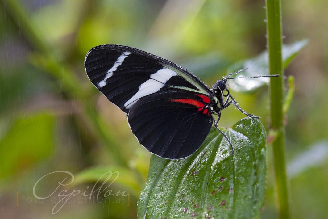 Schmetterlingsausstellung Botanischer Garten München 3