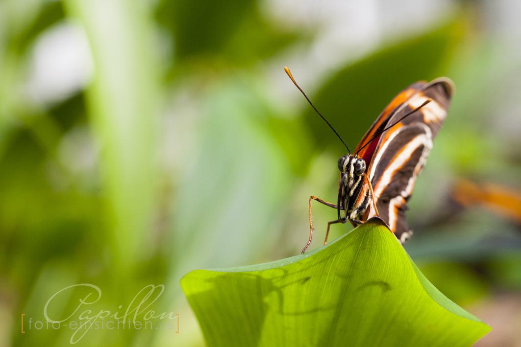Schmetterlingsausstellung Botanischer Garten München 4