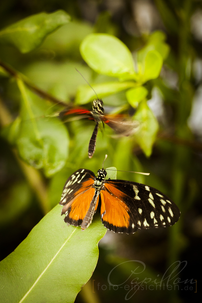 Schmetterlingsausstellung Botanischer Garten München 7