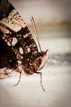 Schmetterlingsausstellung Botanischer Garten München 8