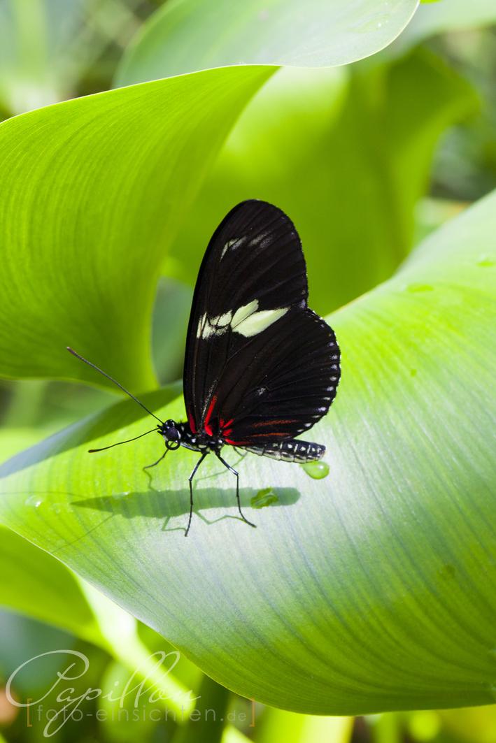 Schmetterlingsausstellung Botanischer Garten München 9