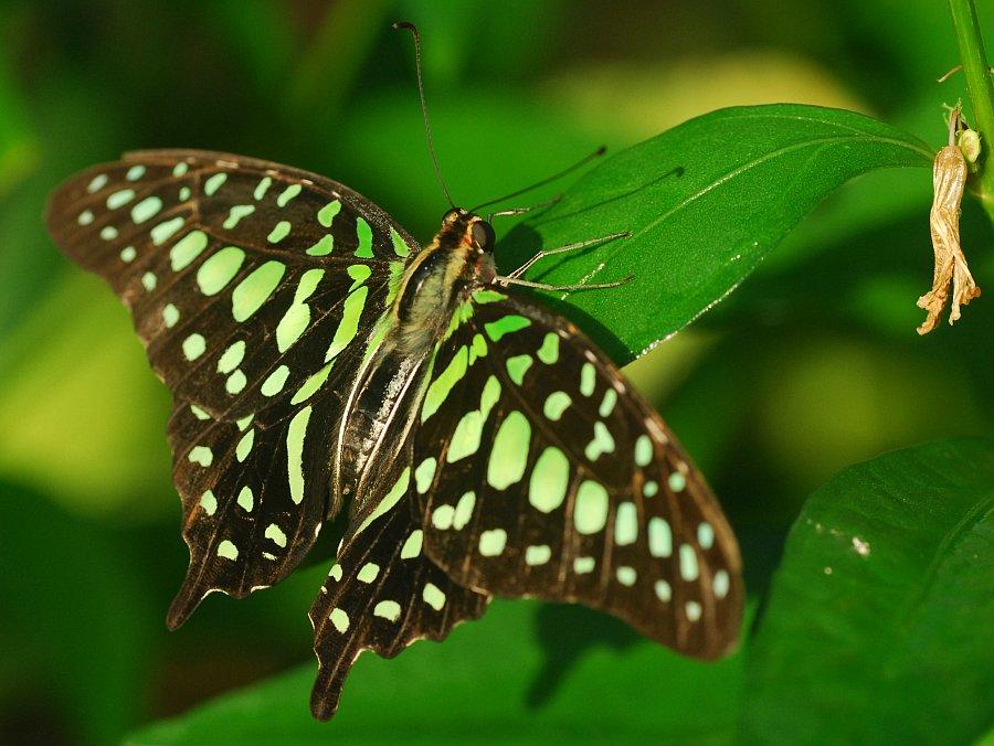 Schmetterlingsaustellung im Botanischen Garten München