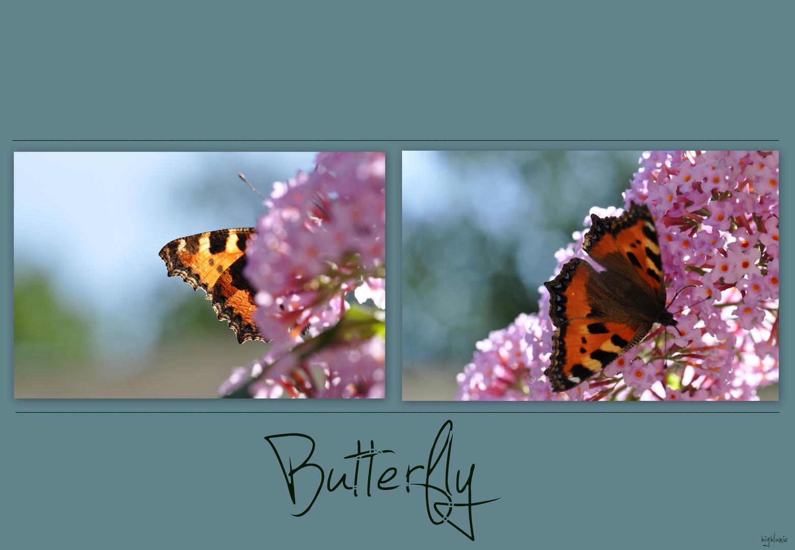 Schmetterlingscollage