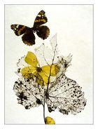 Schmetterlingsflug