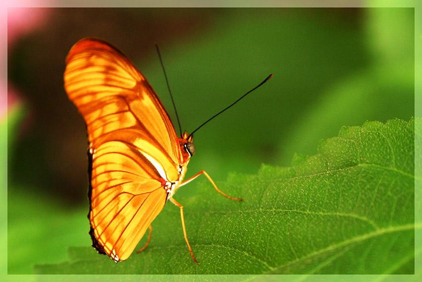 Schmetterlingsgarten Bendorf-Sayn 1