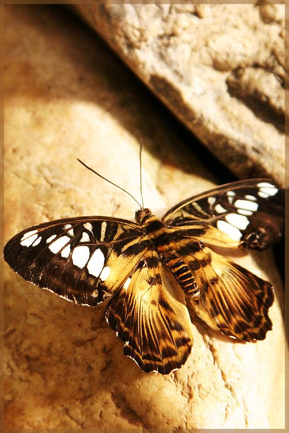 Schmetterlingsgarten Bendorf-Sayn 2