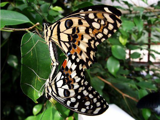 Schmetterlingsgarten Sayn