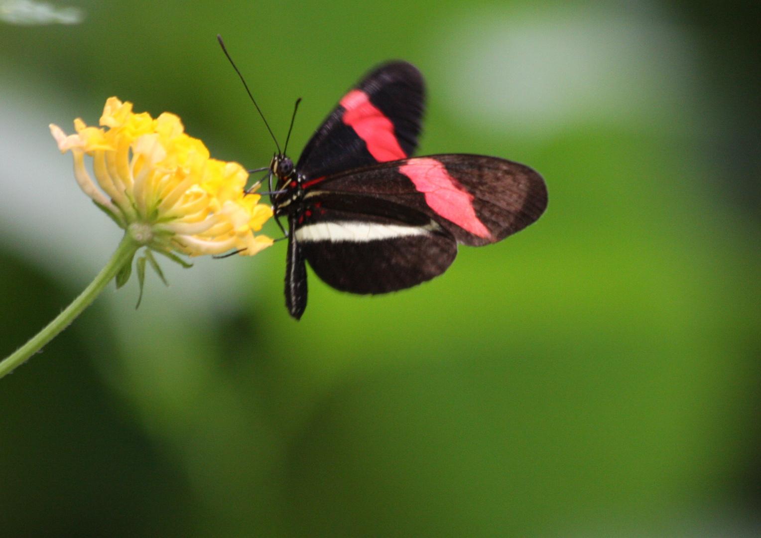 Schmetterlingshaus 1 - [Name nicht bekannt]