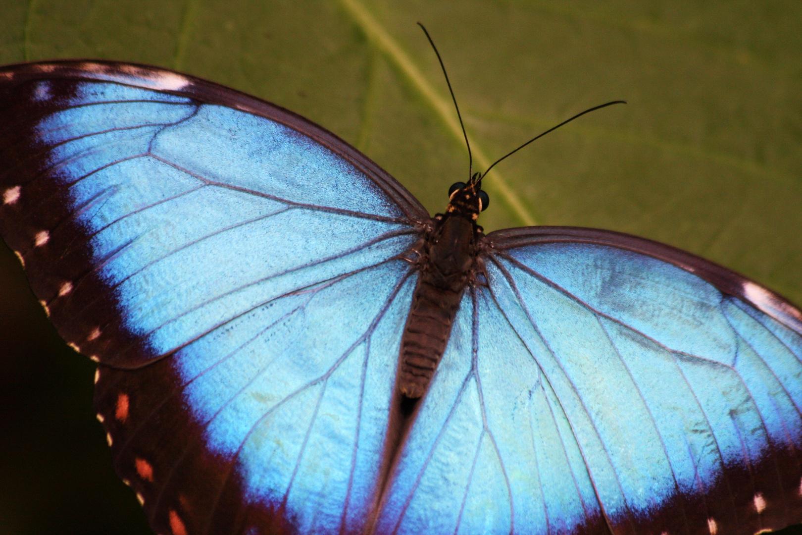 Schmetterlingshaus 2 - [Name nicht bekannt]