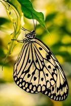 Schmetterlingshaus Ega 2