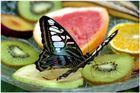 Schmetterlingshaus Elbauenpark