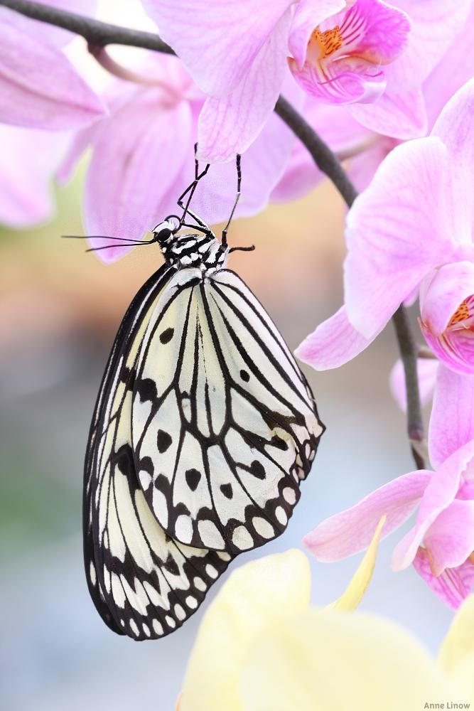Schmetterlingshaus Landesgartenschau Papenburg