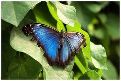Schmetterlingshaus Maximilianpark, Hamm,