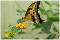 Schmetterlingshaus Maximilianpark, Hamm