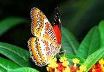 Schmetterlingshaus Wilhelma