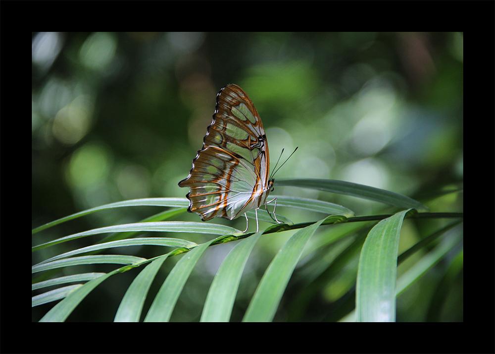Schmetterlingshaus Xcaret Park Mexiko