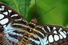 Schmetterlingsmakro aus dem Krefelder Zoo