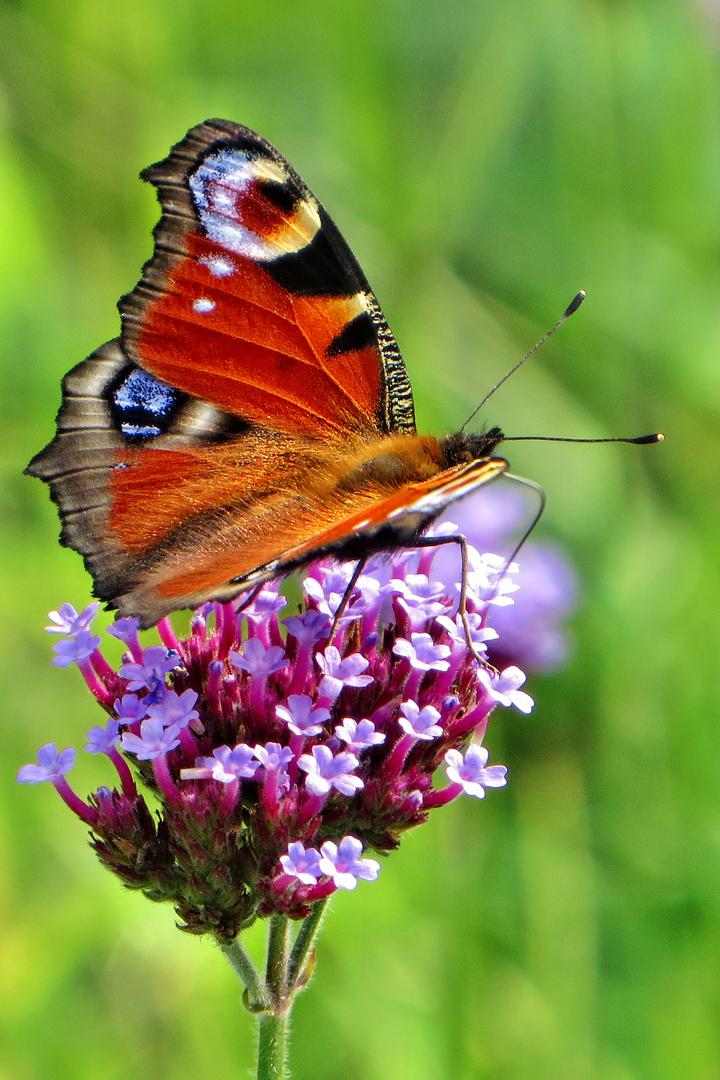 Schmetterlingspark
