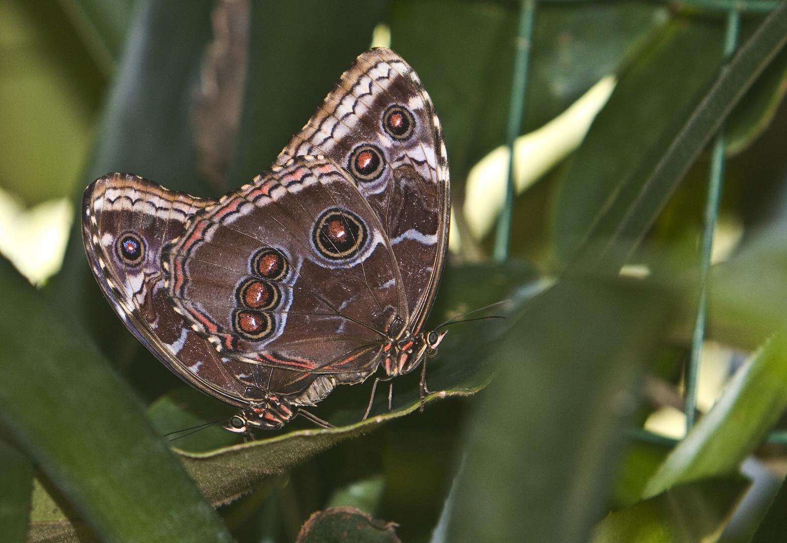 Schmetterlingspark Hamm 30-08-2010