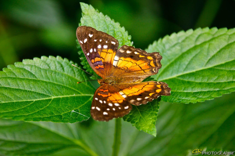 Schmetterlingspark in Wittenberg -2-