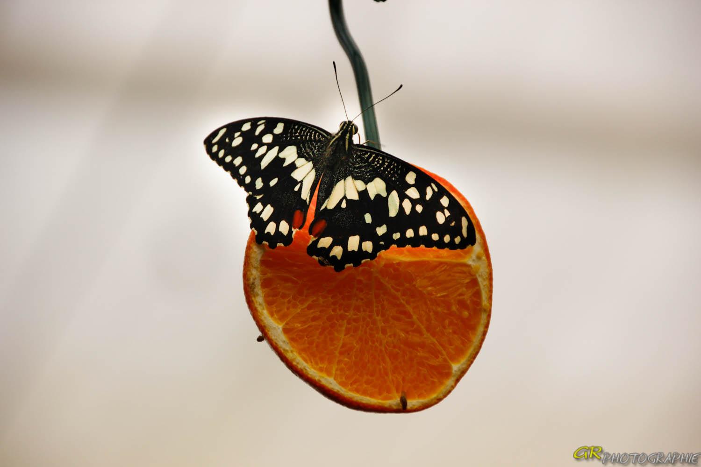 Schmetterlingspark in Wittenberg -3-