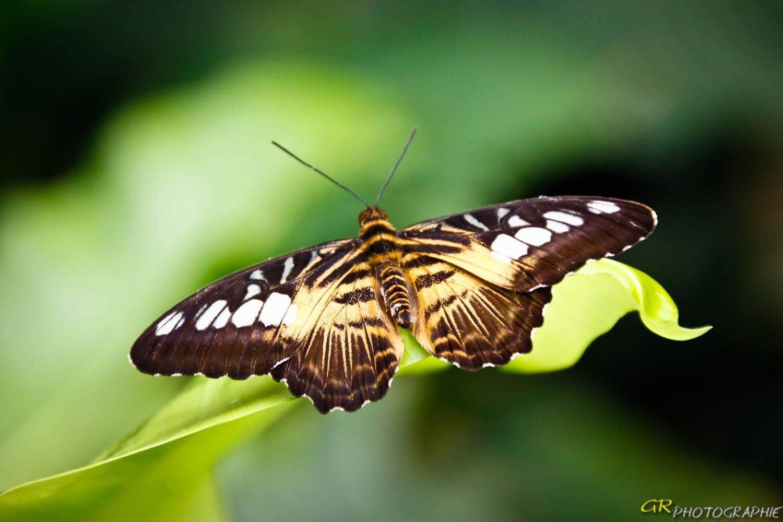Schmetterlingspark in Wittenberg -4-