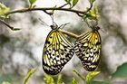 Schmetterlingspark in Wittenberg -5-