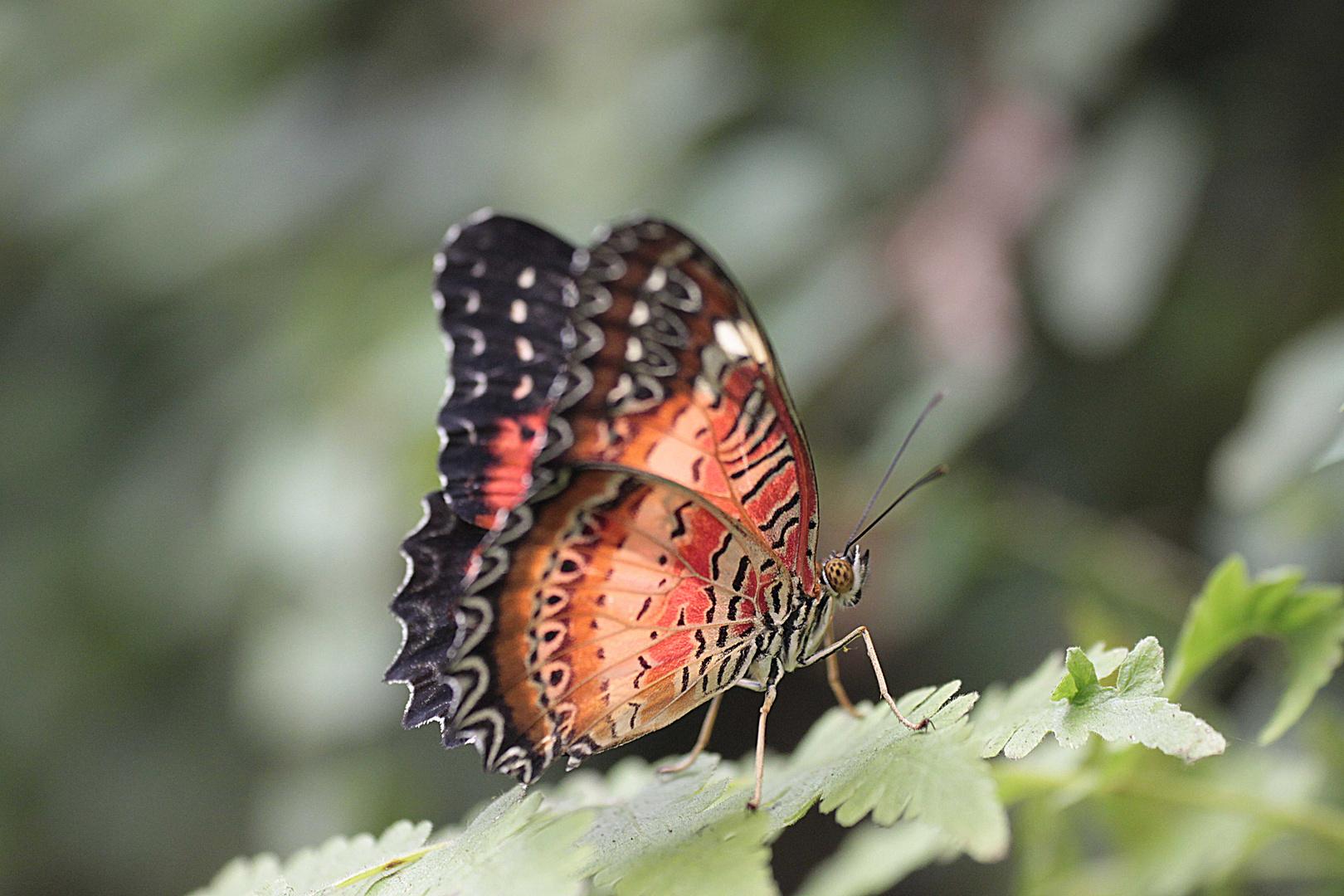 Schmetterlingspark Uslar 13