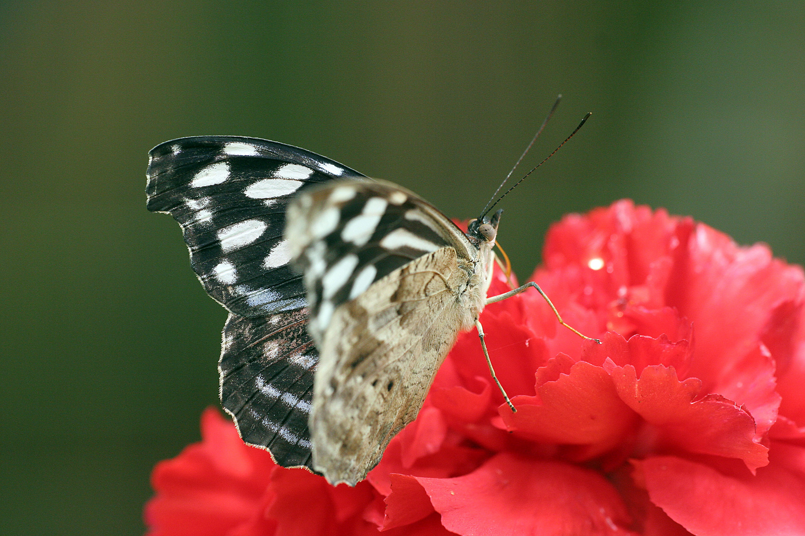 Schmetterlingspark Uslar 15