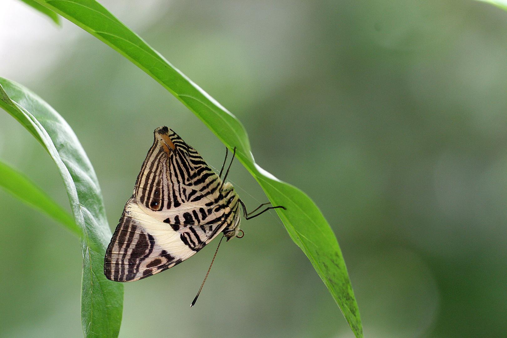 Schmetterlingspark Uslar 17