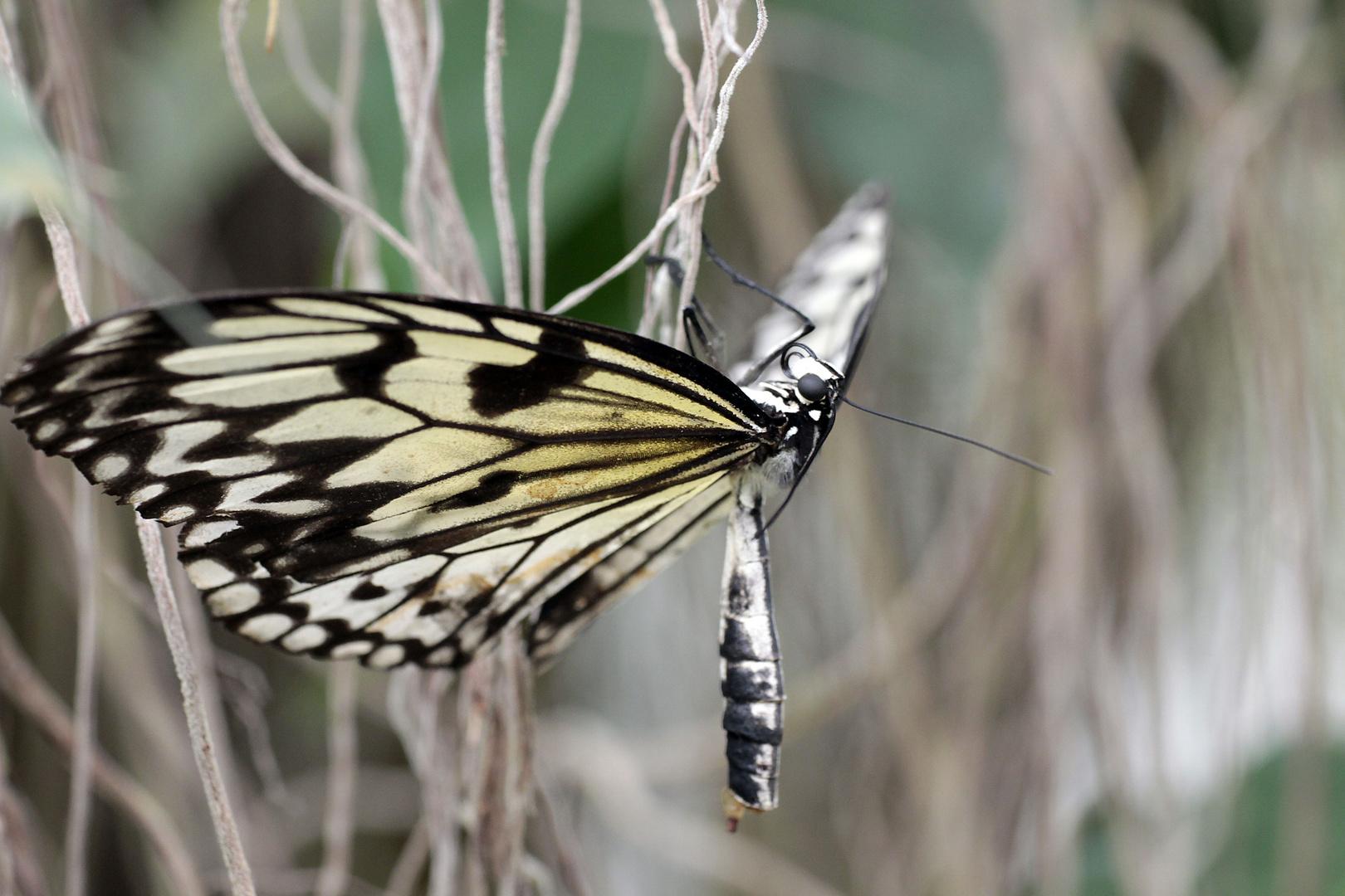 Schmetterlingspark Uslar 9