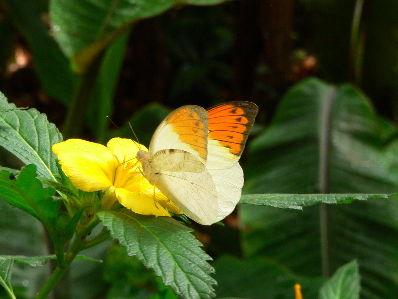 Schmetterlingsschau in Chemnitz