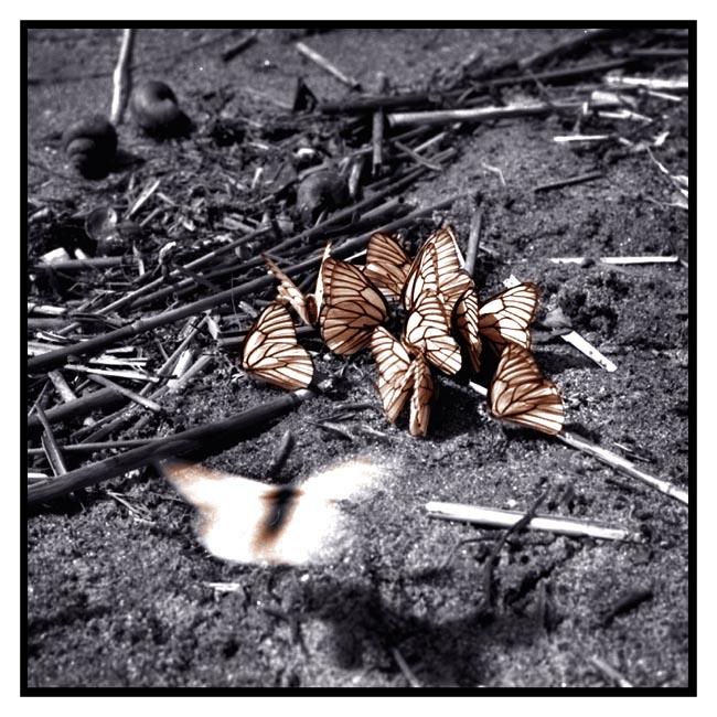 - Schmetterlingstreffen -