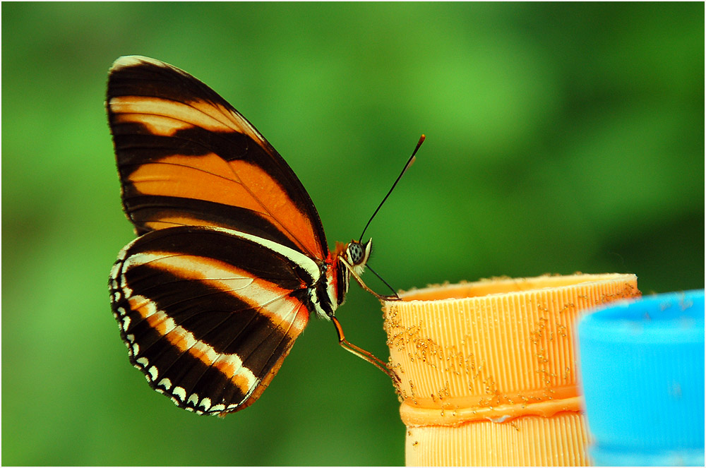 Schmetterlingszucht...