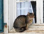 Schmitz` Katze . . .