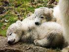 Schmuddelbären